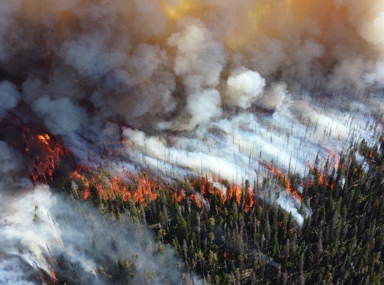 Forest fire blaze